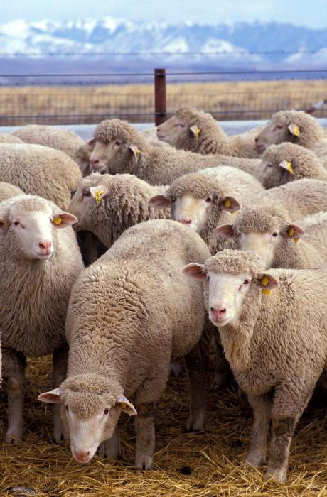 krooniline kaalulangus lambad realistlik kaalulangus kahe kuu jooksul