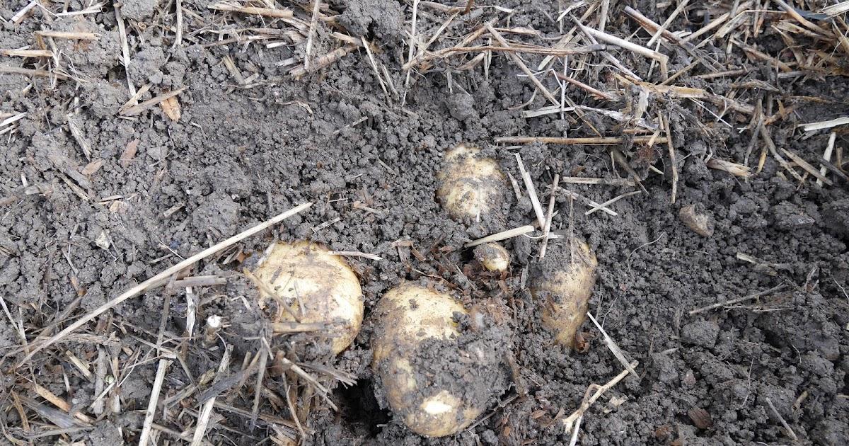 kiire kaalulangus 4 kuud parast kartumist